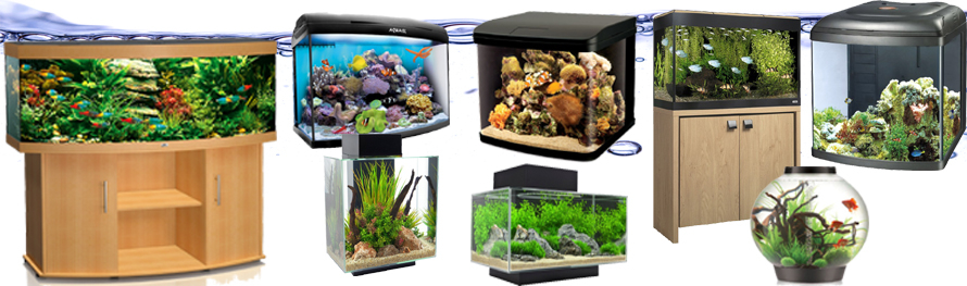 Aquarium Fish Tanks And Stands