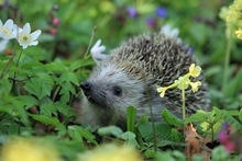Best Supplies for Inviting Spring Wildlife into your Garden