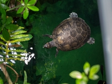 Caring for a Turtle - What you Need to Know