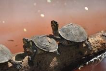 Four Species that make Excellent Pet Turtles