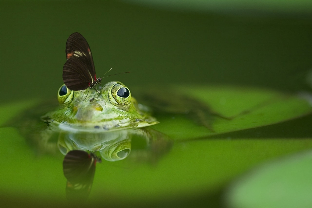 HERE�S WHY HAVING A GARDEN POND IS ALWAYS A FINTASTIC IDEA�