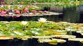 Heres Why Having a Garden Pond is Always a Fintastic Idea...
