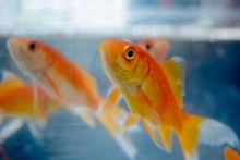 How Often Should You Feed Fish