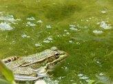 How to Control Pond Algae
