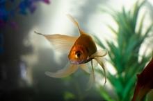 Identify, Prevent & Treat Freshwater Aquarium Diseases