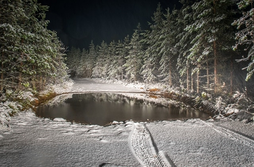 KEEP YOUR KOI COSY THIS CHRISTMAS: WINTER POND TIPS