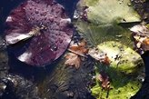 Winter Guide to Pond Maintenance