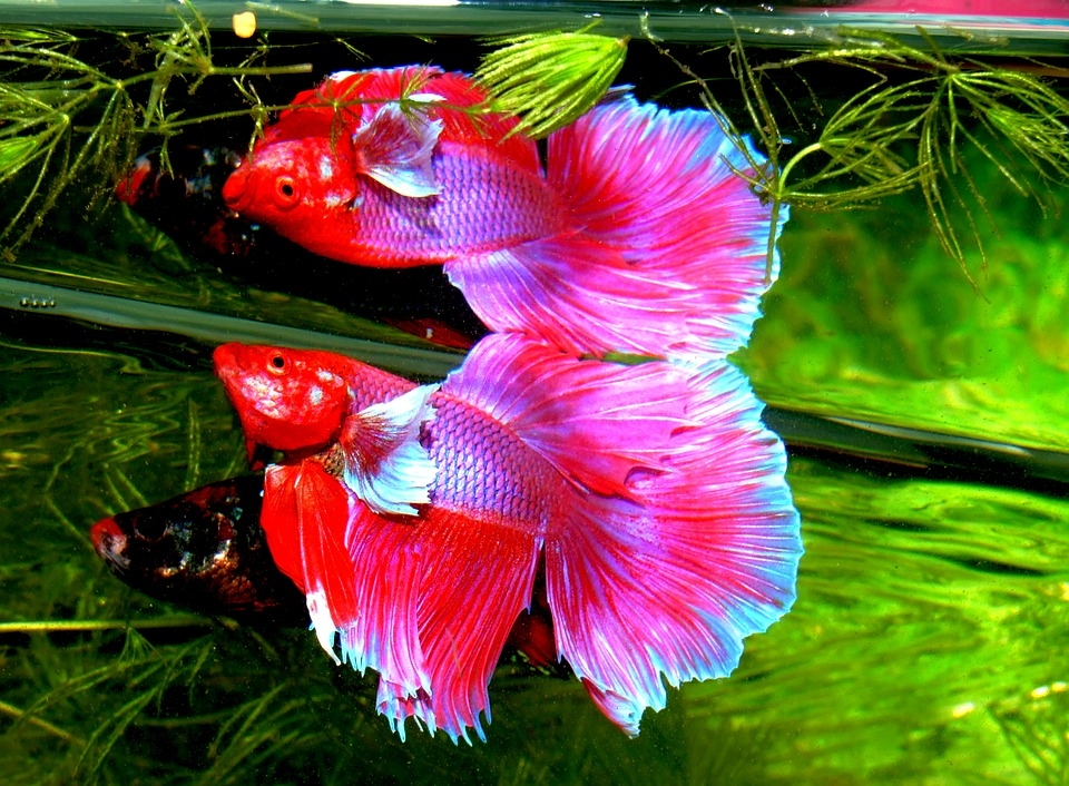 Unusual Tropical Fish For Your Freshwater Home Aquarium