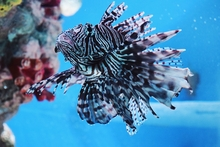 What is the Difference Between a Tropical and Marine Tank?