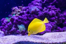 What to Know When Setting Up a New Fish Tank