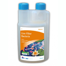 Why add good bacteria to your aquarium or pond filter?
