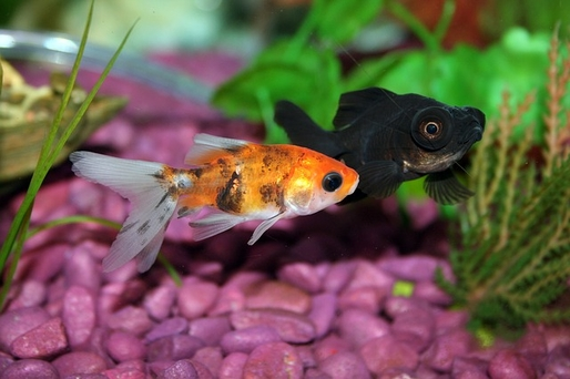 Your Useful Guide to Buying a Fish Tank