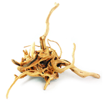 Azalea Root / Spider Wood