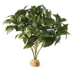 Exo Terra Laurel Bush Plant
