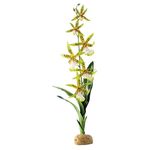 Exo Terra Spider Orchid Plant
