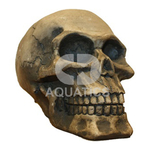 Human Skull Standard Aquarium Ornament