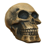Aqua One Human Skull Ornament