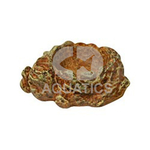 Reptile One Feeding Dish 13 X 11cm